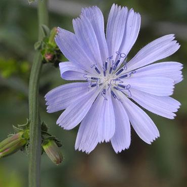 stefan-kafader-pflanze
